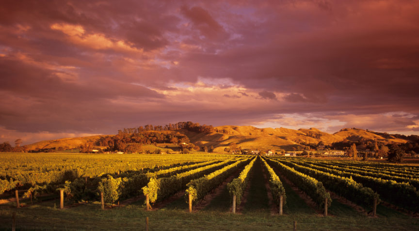 fw-hawkes-bay-te-mata-vineyard